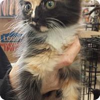 Adopt A Pet :: Tina Louise - Stafford, VA