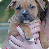 Adopt A Pet :: Hermoine - Grand Rapids, MI