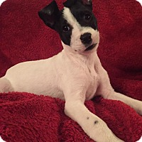 Adopt A Pet :: Nelson - Uxbridge, MA