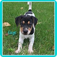 Adopt A Pet :: Gage - Elburn, IL