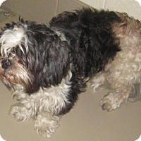 Adopt A Pet :: hercules - Johnson City, TN