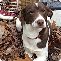 Adopt A Pet :: Clyde - available 1/28 - Sparta, NJ