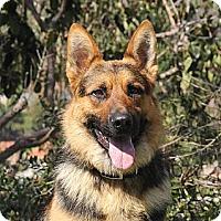 Adopt A Pet :: Yukon - Laguna Niguel, CA