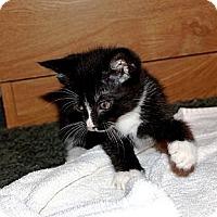 Adopt A Pet :: Mittens - Nolensville, TN