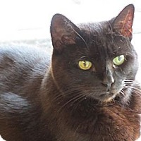 Adopt A Pet :: SHAWOW - Hamilton, NJ