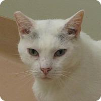 Adopt A Pet :: Dewey - Walden, NY