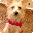 Adopt A Pet :: Wallace