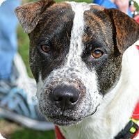 Adopt A Pet :: MayBelle - Wimberley, TX