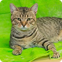 Adopt A Pet :: Winston - Elmwood Park, NJ