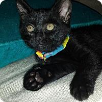 Adopt A Pet :: Jacey - Laguna Woods, CA