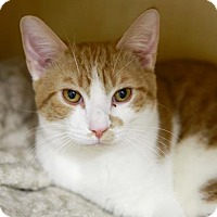 Adopt A Pet :: Ziggy - Kettering, OH