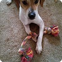Adopt A Pet :: Popeye - Plainfield, IL