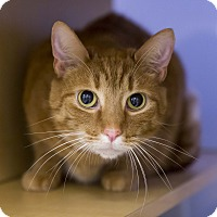 Adopt A Pet :: Marvel - Kettering, OH