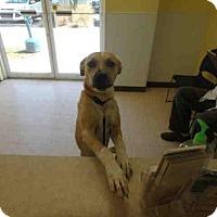 Adopt A Pet :: CHESTER - Naples, FL