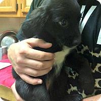 Adopt A Pet :: Evelyn - Kimberton, PA