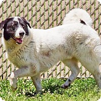 Adopt A Pet :: Billy - Lincolnton, NC