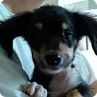 Adopt A Pet :: Oliver - Humble, TX
