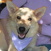 Adopt A Pet :: Payton - Garfield Heights, OH