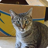 Adopt A Pet :: Penelope - West Palm Beach, FL