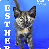 Adopt A Pet :: Ester - Carencro, LA