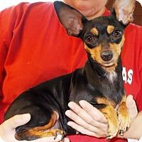 Adopt A Pet :: Abba - Kalamazoo, MI