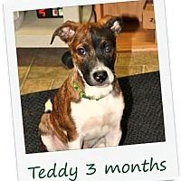 Adopt A Pet :: Teddy - PENDING ADOPTION - Hinesburg, VT