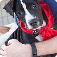 Adopt A Pet :: Roxanne - Santa Monica, CA