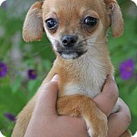 Adopt A Pet :: Onyx - Yuba City, CA