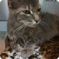 Domestic Shorthair Cat for adoption in Spring Brook, New York - Nancy