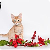 Adopt A Pet :: Fancy - Tomball, TX