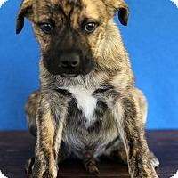 Adopt A Pet :: Antonio - Waldorf, MD