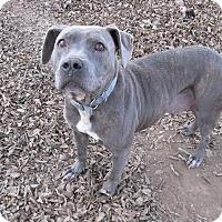 Adopt A Pet :: Charolette - Manhattan, KS