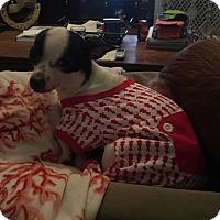 Adopt A Pet :: Paxton - Lexington, KY