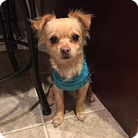 Adopt A Pet :: Chewy - New Oxford, PA