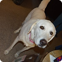 Adopt A Pet :: Ceilie - Peyton, CO