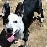 Adopt A Pet :: Albion - Bellevue, NE