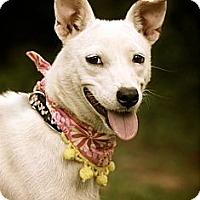 Adopt A Pet :: Bianca - Albany, NY