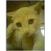 Adopt A Pet :: Titan - Owasso, OK