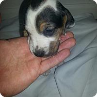Adopt A Pet :: Arietta Barnett - Lancaster, PA