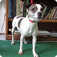 Adopt A Pet :: Luna - Washingtonville, NY