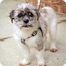 Adopt A Pet :: Lammie