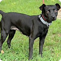 Adopt A Pet :: Bell - Charlemont, MA