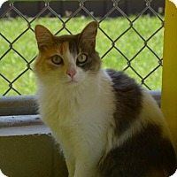 Adopt A Pet :: Lara - New Iberia, LA