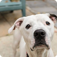 Adopt A Pet :: Elsa--Pending Adoption - Lancaster, PA