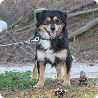 Adopt A Pet :: MARCO - Hartford, CT