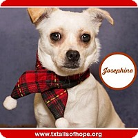 Adopt A Pet :: Josephine - Forreston, TX