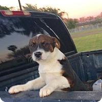 Adopt A Pet :: Fiona - Aurora, CO