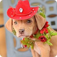 Adopt A Pet :: Leda - Baton Rouge, LA