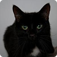 Adopt A Pet :: Kamden - Queenstown, MD