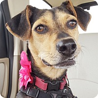 Adopt A Pet :: Sally - Knoxville, TN